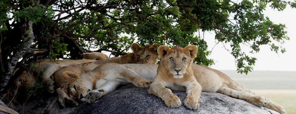 Safari Simba (partenze giornaliere) – 6 giorni