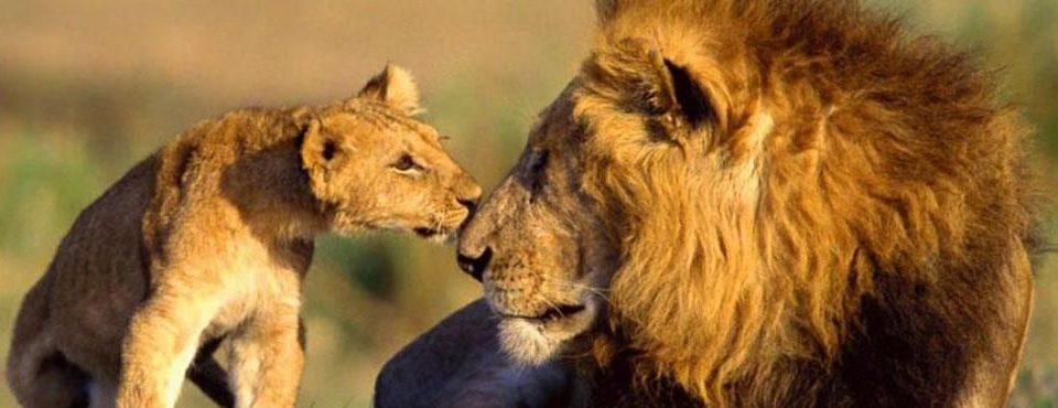 Safari Simba – 7 giorni