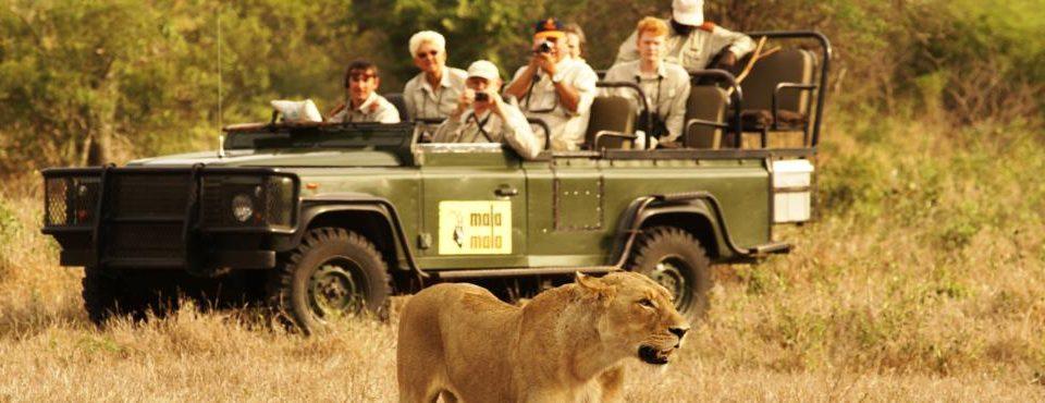 Sudafrica con riserva privata di Mala Mala