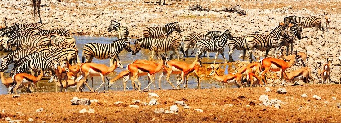 Parco Etosha in Namibia