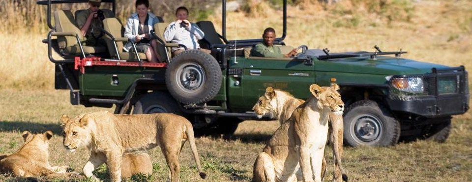 Emozioni sudafricane + Cascate Victoria e parco Chobe – 14 giorni