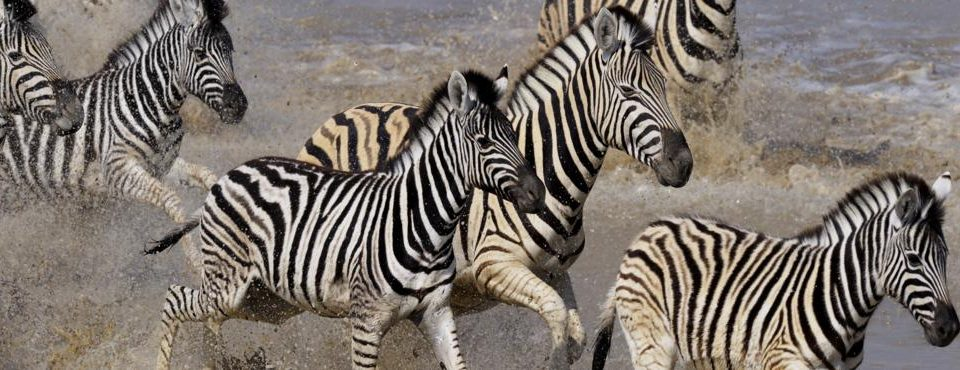Safari Samburu – 8 giorni
