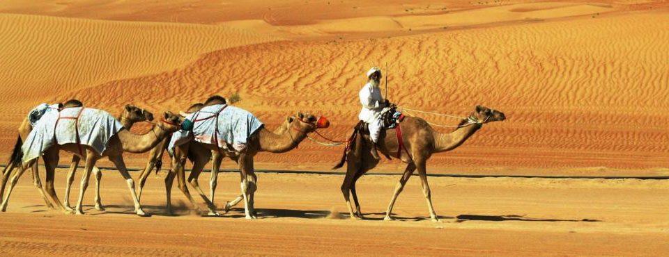 Alla Scoperta dell'Oman  – Tour con Guida Parlante Italiano