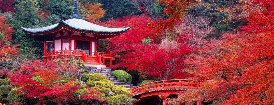 Welcome Tokyo e Kyoto - 7 giorni