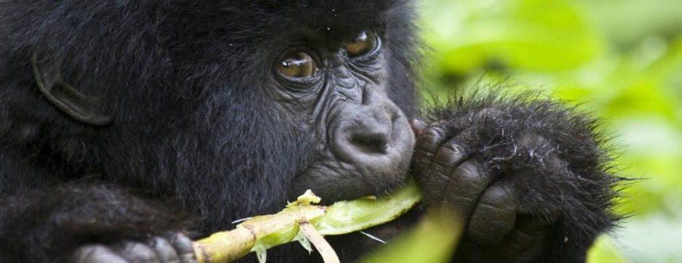 Regno dei Primati – 10 giorni