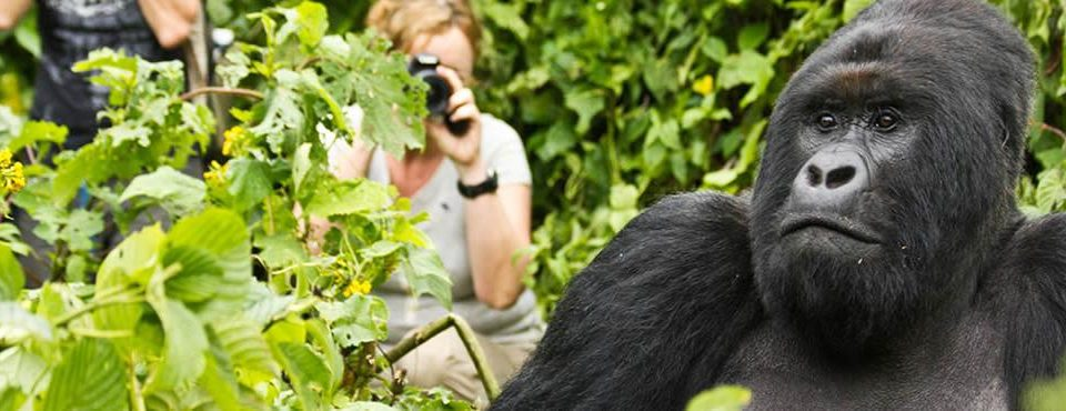 Gorilla Trekking in Uganda (programma con voli interni) – 4 giorni