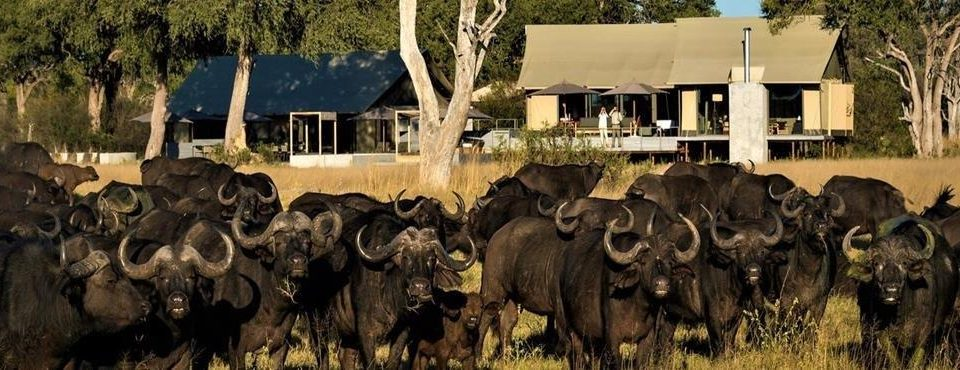 Cascate e Bush – Zimbabwe e Botswana – 7 giorni
