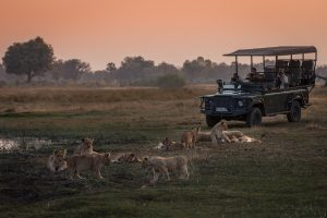 Osservare i leoni dall jeep