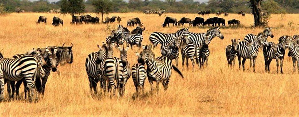 Safari Samburu, circuito via terra – 8 giorni