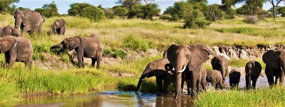 Gran Safari al Nord  – 7 giorni