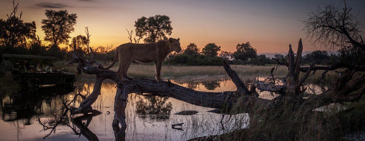 Animali durante un safari in Africa